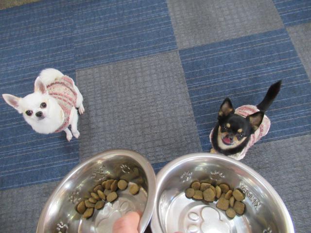 愛犬も医食同源